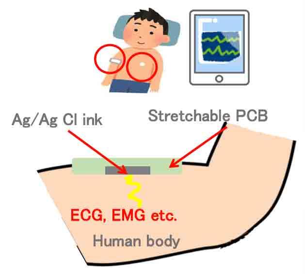 ECG, EMG sensor